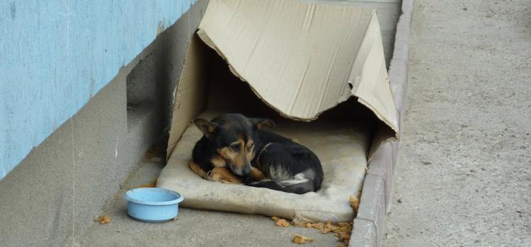 Chega de animal abandonado nas ruas!